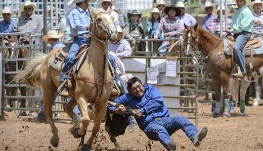 Steer wrestler Tyrone Tsosie starts to dig his heels in as he brings his steer down during the Gallup Inter-Tribal Ceremonial Rodeo at Red Rock Park Friday.
