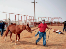 Ramah-Navajo Chapter  hosts mobile vet clinic        for horseowners